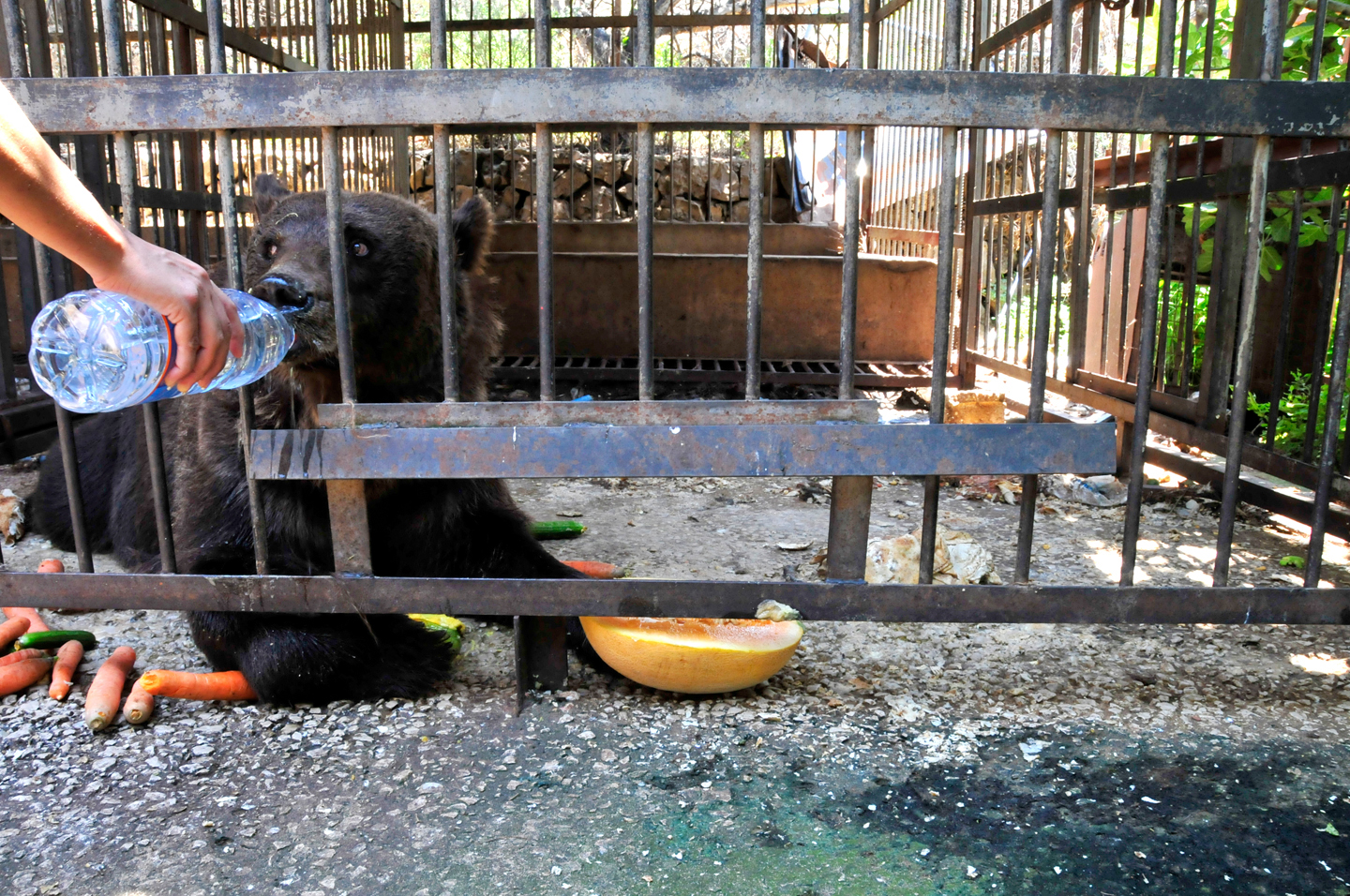 Exotic Animals As Pets In Cages