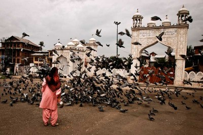 Pigeons in Sringar, India. Training homing pigeons is a popular pastime around the world and is practiced by celebrities like Mike Tyson and Queen Elizabeth. (Photo from Flickr by Tanya May)