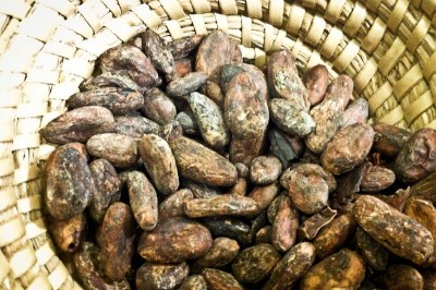 Raw cacao beans. (Photo by Sarah Stuteville)