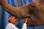 A man feeds an elephant outside the circus tent