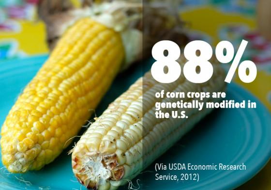 GMO PhotoFacts_4