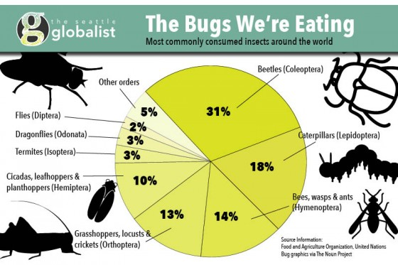 Bugs Infographic by Sara Stogner