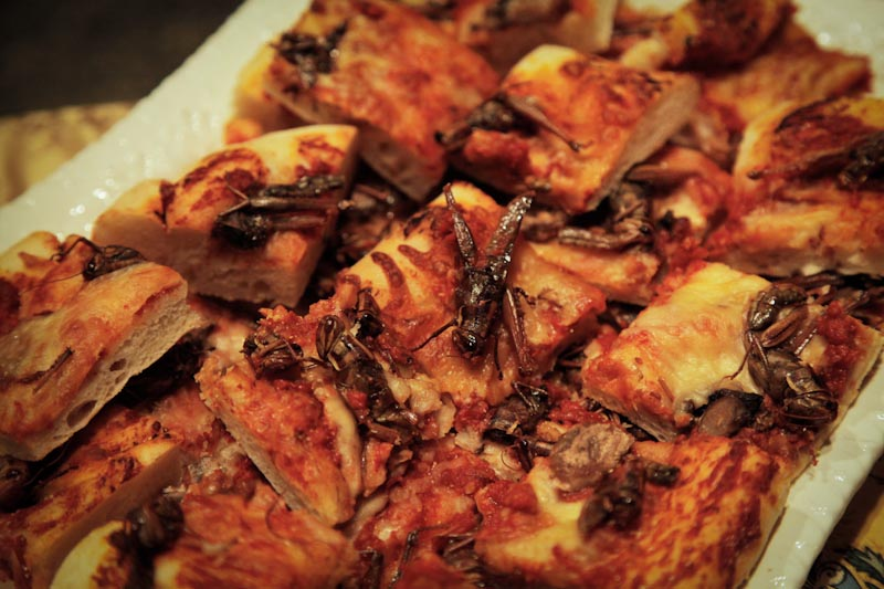 Cafe Racer's grasshopper pizza, served at the Burke Museum's Bug Chef lecture (Photo courtesy of the Burke Museum)