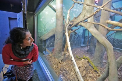 "Lakeside senior and Woodland Park Zoo volunteer Sharanya Sarathy observes sloths at the zoo. ""They're really bizarre and really cute at the same time,"" she says. (Photo by Greg Gilbert / The Seattle Times)"