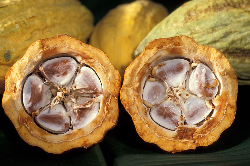 Cocoa beans in a cocoa pod. These are harvested to eventually make chocolate. (Photo via Agricultural Research Service)