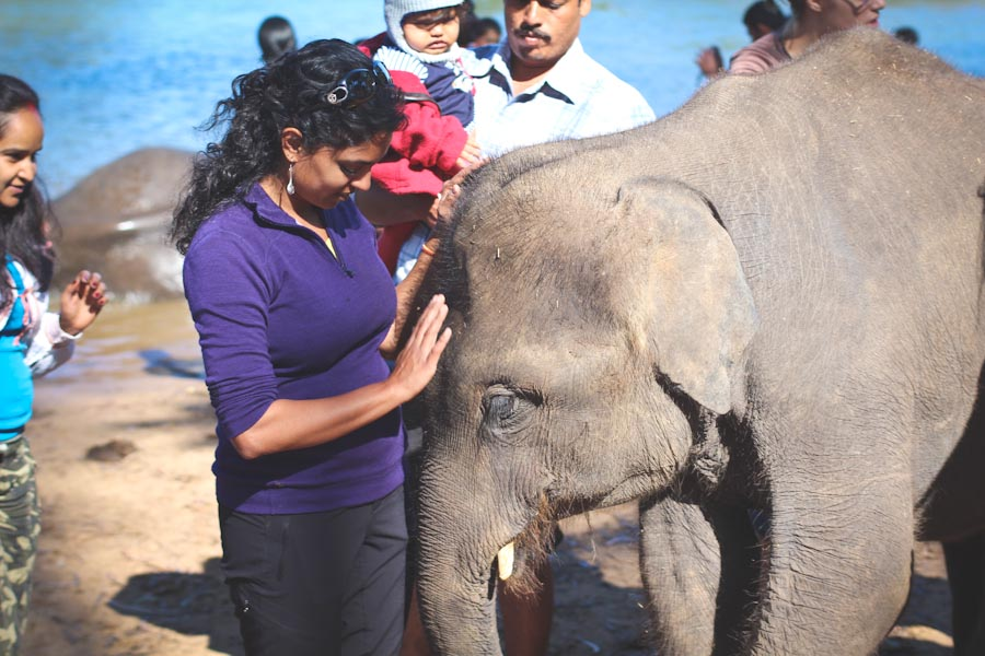 The author with a baby elephant on a recent trip to India. (Photo courtesy Sudha Nandagopal)