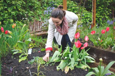 Celia Payen checks on her freshly sprouted radishes, flanked by tulips on her left and a cardoon plant on her right. (Photo by Irina Vodonos)