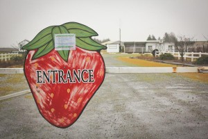 Sakuma Bros. Farms entrance. (Photo by Ashley Stewart)