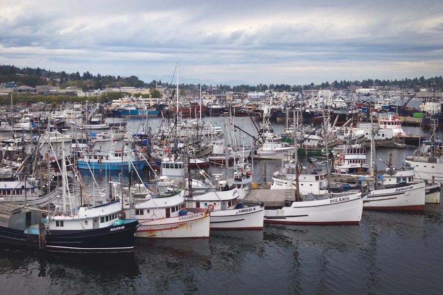 Warm waters strain shared bc washington salmon fishery for Fishing boats seattle