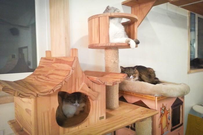 Cat Cafe in Korea