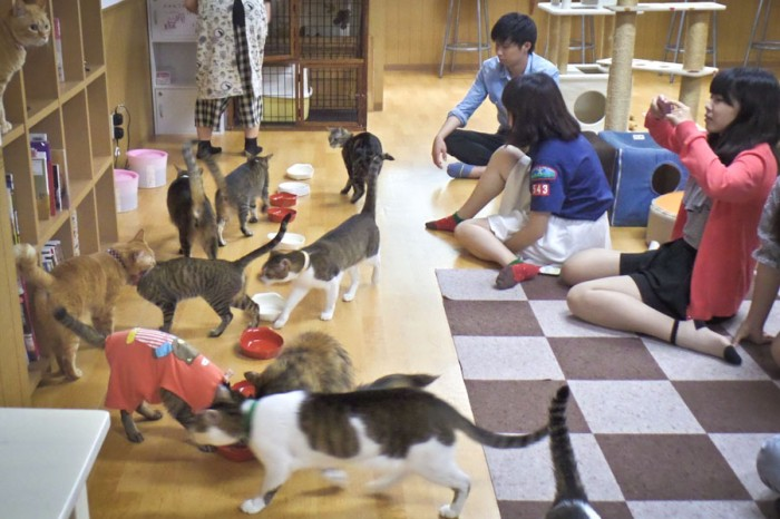 Customers mingle with cats in a Japanese cat café. (Photo courtesy of Hailey Guo)