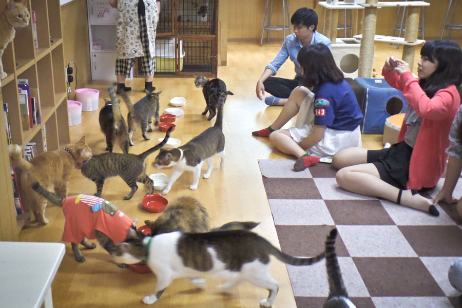 Japanese Style Cat Cafe Coming To Seattle The Seattle
