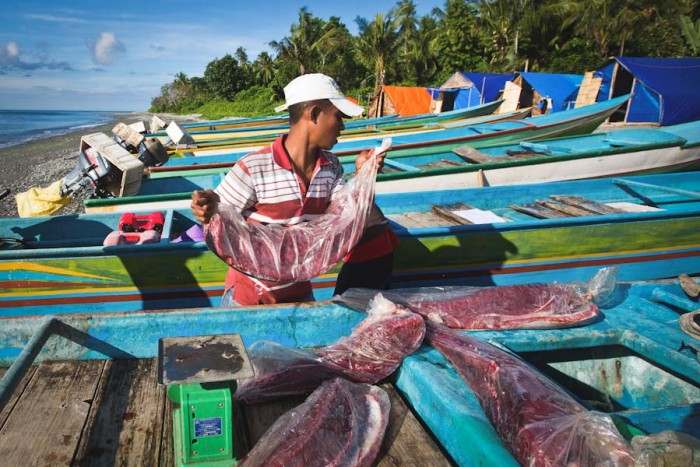 Tuna loins are offloaded at Waepure, one of the Indonesian fishing villages that's formed a Fair Trade Fishing Association. (Photo by Paul Hilton / Fair Trade USA)