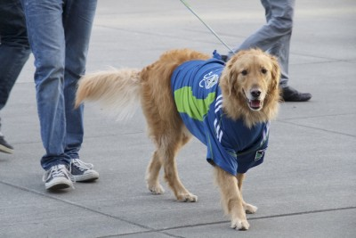 Sounders fans are very diverse, even dogs like soccer. (Photo by Justice Magraw)