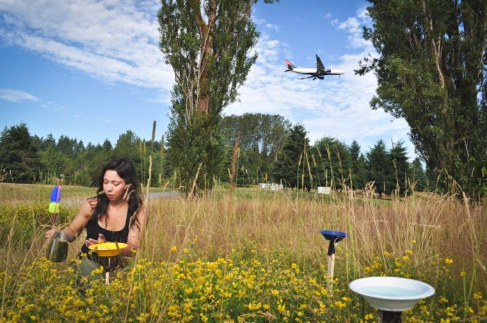 Ashley Powell, Common Acre staff member, surveys wild bee populations at the Sea-Tac Airport last summer. (Courtesy photo)