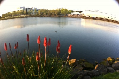 Plants and animals thrive along the Duwamish, but the backdrop of industrial buildings belies a history of pollution. (Photo by Alex Stonehill)
