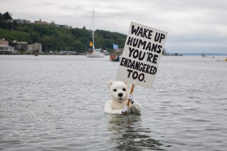 Seattle polar bear protestor.