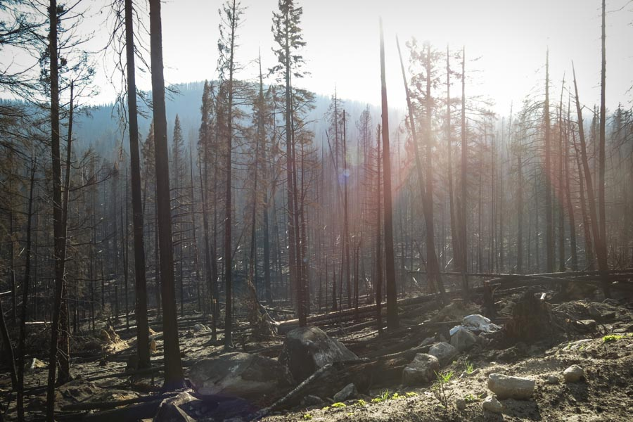 More than 20 percent of the Colville Reservation burned in two major fires this summer. (Photo by Colton Miller)