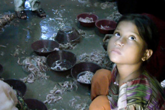 A small-scale shrimp peeling factory in Karachi, Pakistan where children, mostly girls, work in abusive, unsanitary conditions rather than attending school. (Video still by Alex Stonehill)