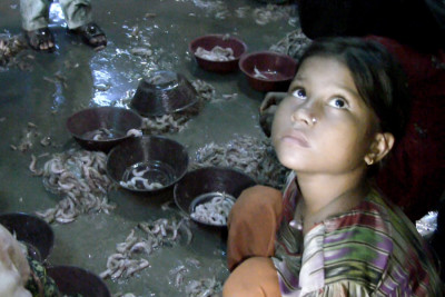 A small-scale shrimp peeling factory in Karachi, Pakistan where children, mostly girls, work in abusive, unsanitary conditions during school hours. (Video still by Alex Stonehill)