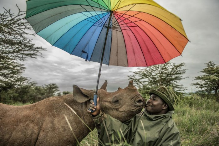One of Vitale's National Geographic assignments was covering efforts to save some of the last few white rhinos on earth. (Courtesy photo by Ami Vitale)