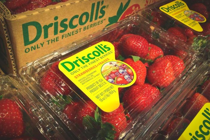 Watsonville, California-based Driscoll's, estimated to be the world's largest berry distributor, has faced calls for a consumer boycott over conditions at Sakuma Brothers Farms here in Washington, and other source farms in Mexico. (Photo from Flickr by Mike Motzart)