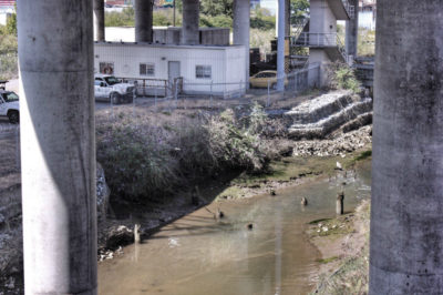 Polluted and murky regions of Duwamish River