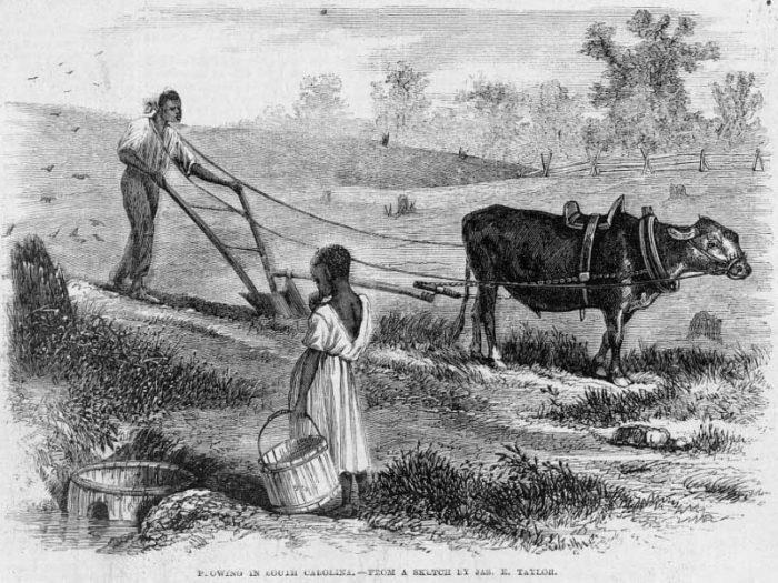 A post-Civil War woodcut shows a black farmer plowing in South Carolina. (Public Domain)