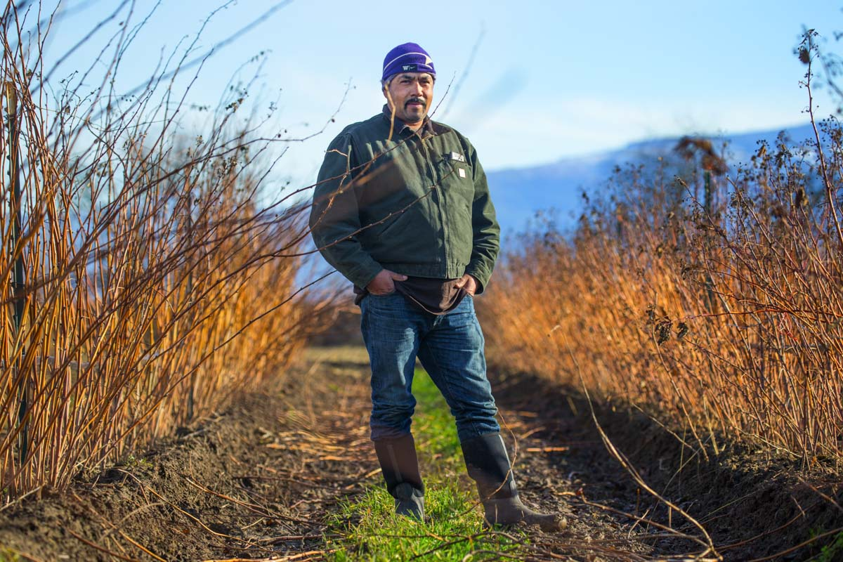 Mauricio Soto who owns Arado Farms, grows raspberries on land he leases from Viva Farms along Highway 20 in the Skagit Valley. (Photo by Mike Siegal / The Seattle Times)