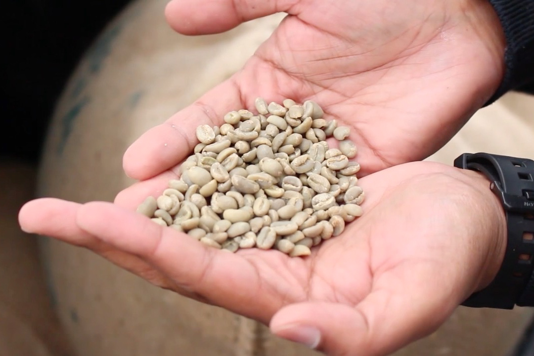 Efrem Fesaha, founder and CEO of Boon Boona Coffee, holds un-roasted coffee beans that he imports to the U.S. and Canada for the traditional East African coffee ceremony. (Video still by Anna DiBlosi)